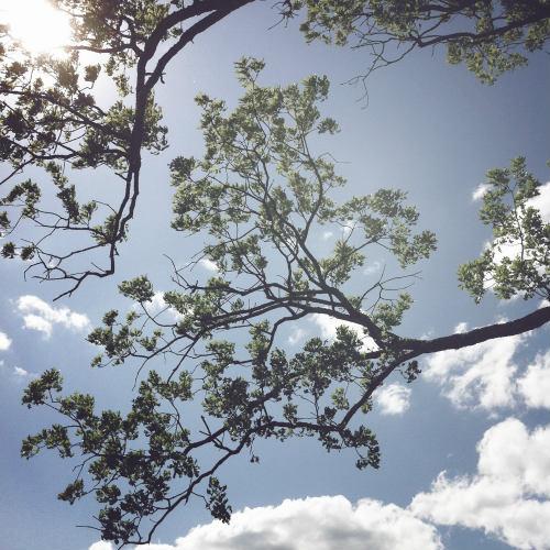 500newtrees