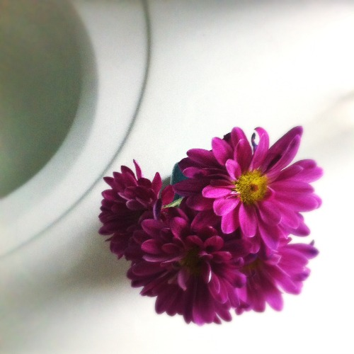500flower
