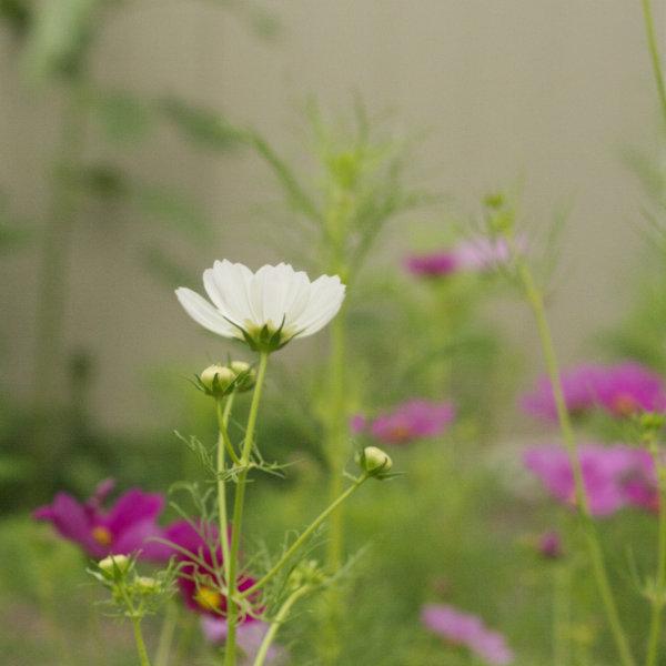 600flowers1