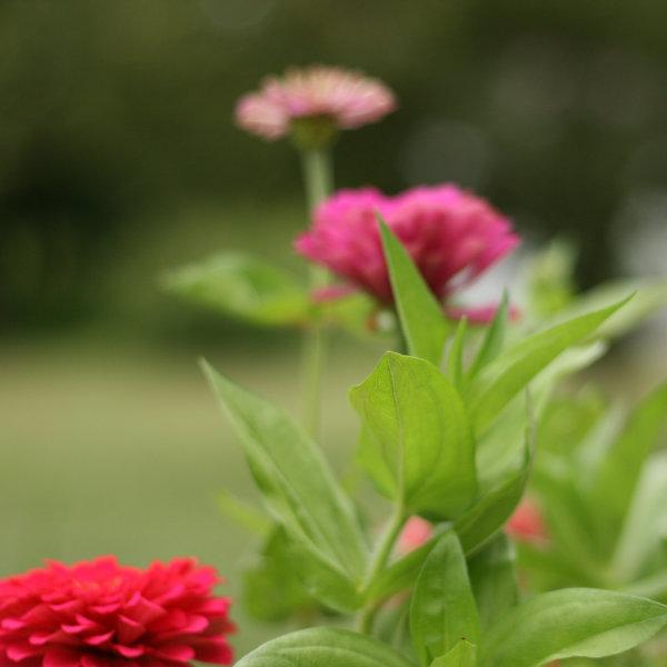 600flowers3