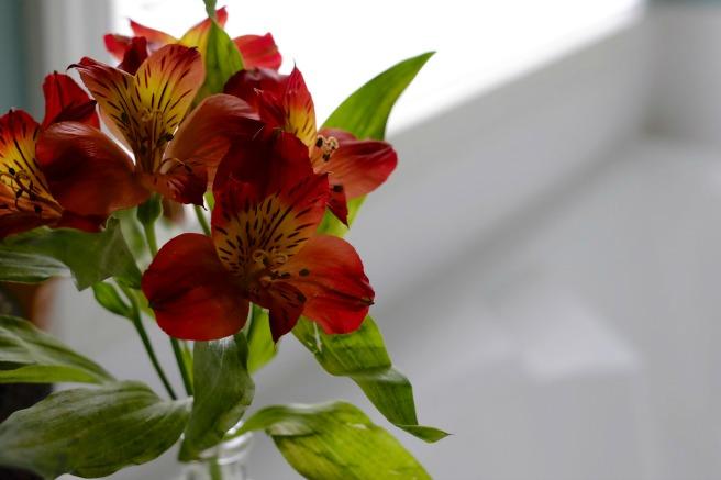 656flowers
